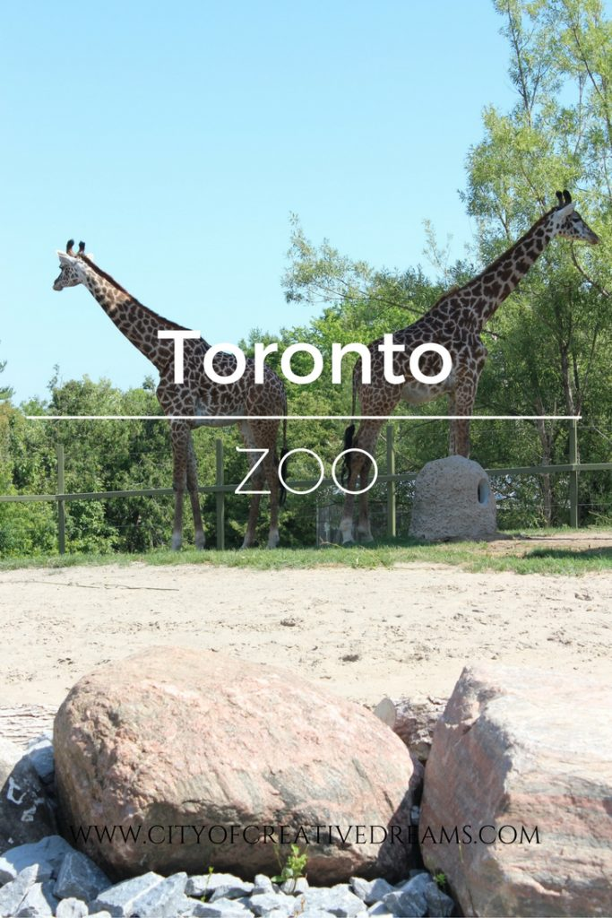 Toronto Zoo | City of Creative Dreams